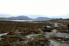 Coastline at NessPoint - with lots of Bladderwrack